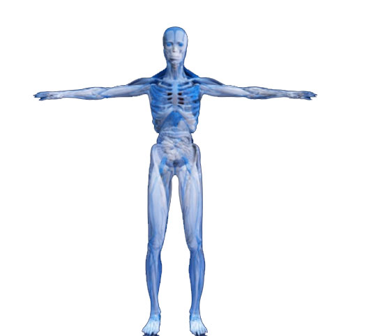 human body secrets